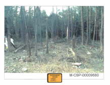 Flight 93 Debris 4